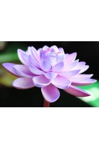 Tranh gạch 3D hoa H115