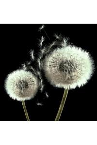 Tranh gạch 3D hoa H135