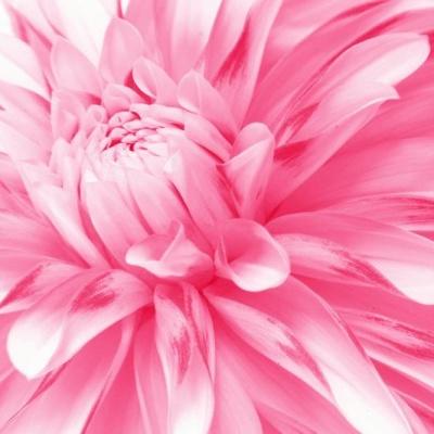 Tranh gạch 3D hoa H68