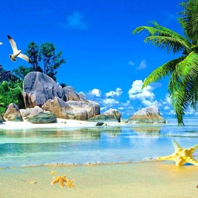 Video bãi biển cây dừa